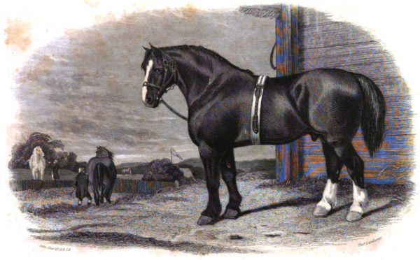 The Book of the Farm Horse Picture