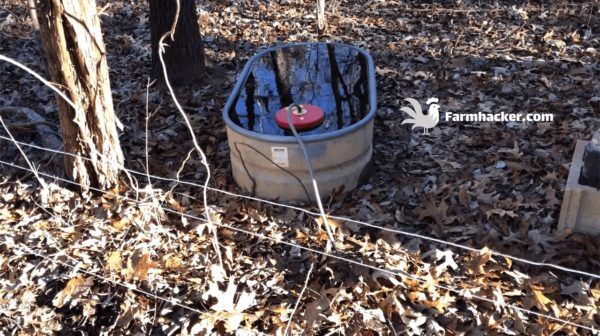 How to Keep Pig & Goat Water From Freezing