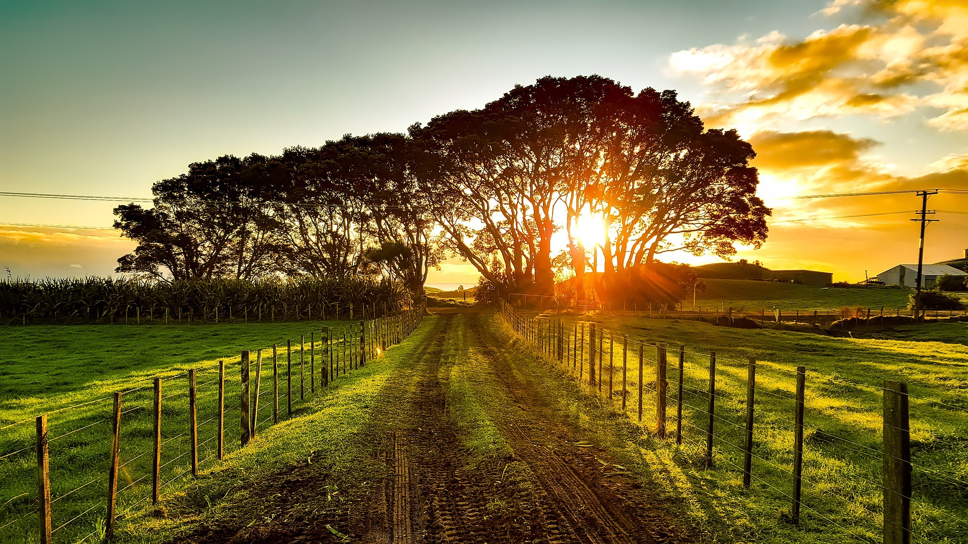 Dirt Road Between Fences and Beautiful Sunset - Farm Background Wallpaper Pictures