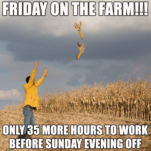 Friday on the Farm, Only 35 More Hours to Work Before Sunday Evening off - Farming Memes - Person Throwing Corn Image