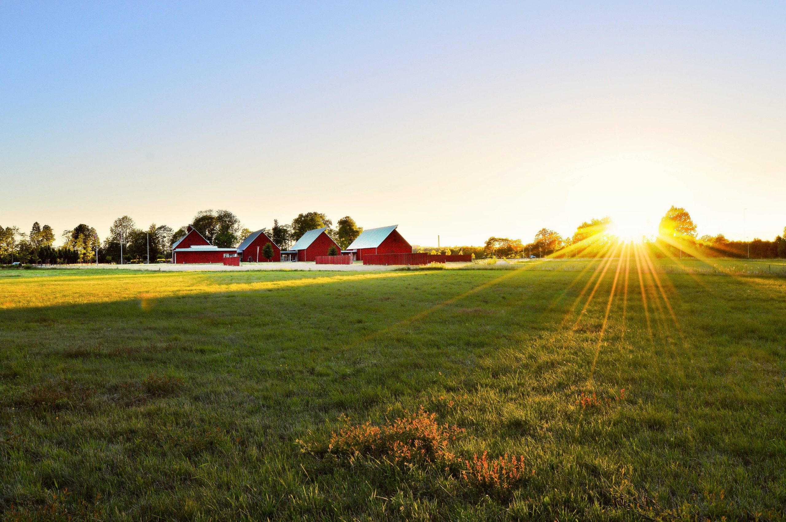 Green Pasture With Four Red Barns and a Beautiful Sunset - Farm Background Wallpaper Pictures