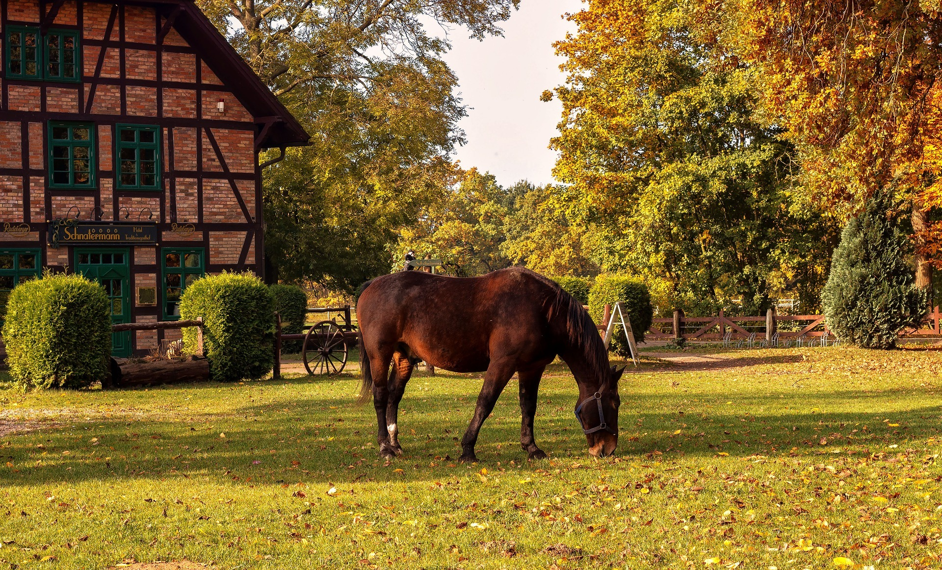 Horse Eating Pasture in Front of Beautiful Barn in the Fall - Farm Background Wallpaper Pictures