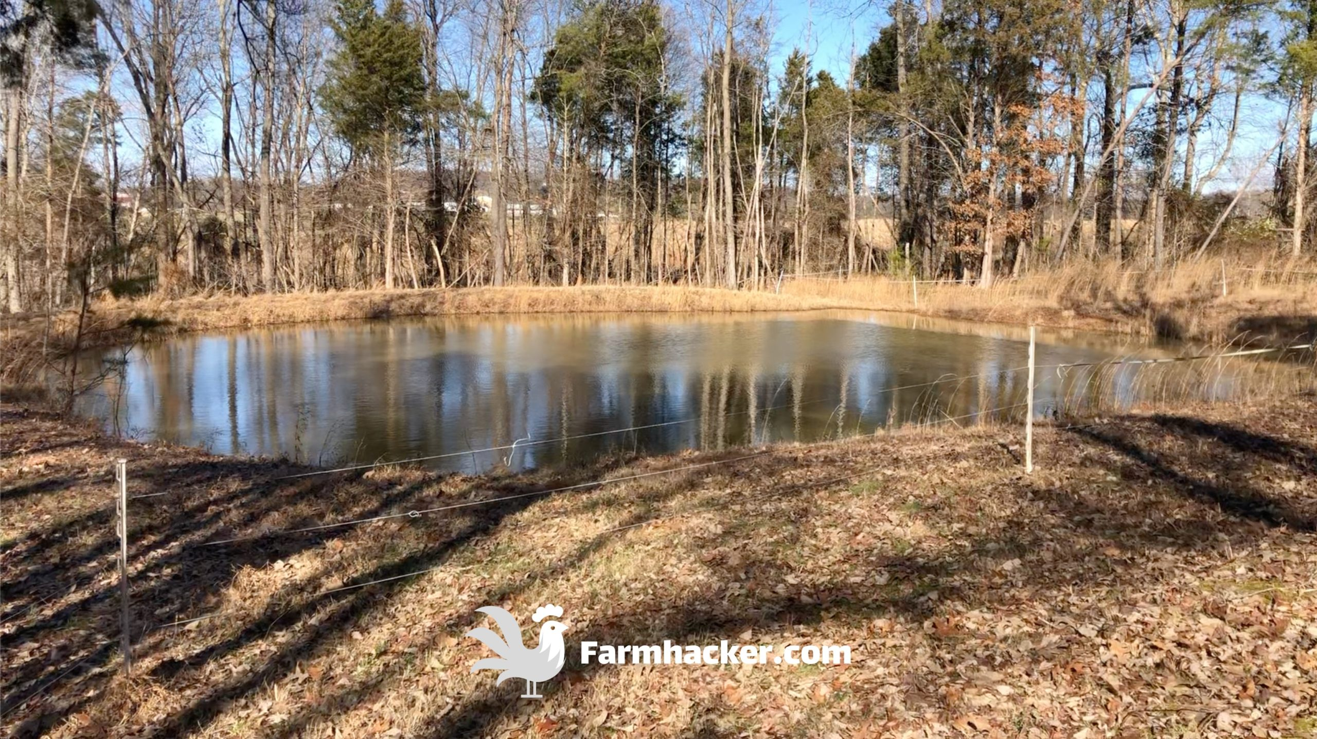 Our Pond Holds Twice as Much Water Now - How to Seal a Pond Naturally With Pigs