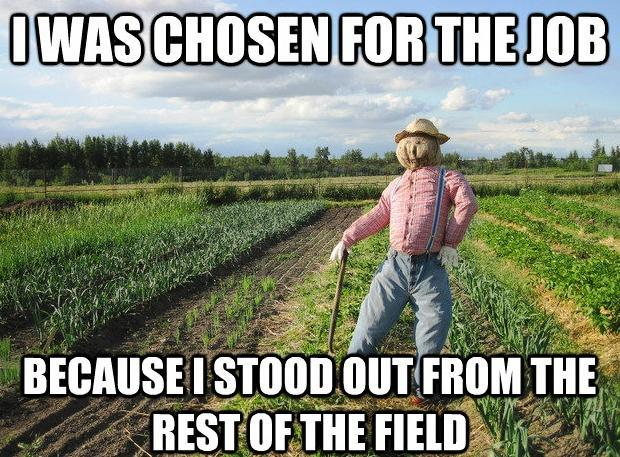 I Was Chosen for the Job Because I Stood out From the Rest of the Field - Farming Memes - Scarecrow in a Field Image