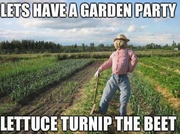 Lets Have a Garden Party, Lettuce Turnip the Beet - Farming Memes - Scarecrow in a Field Image
