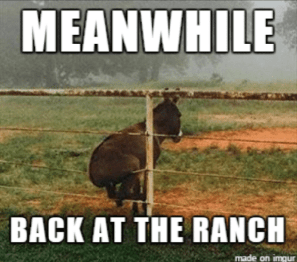 Meanwhile Back at the Ranch - Farming Memes - Donkey Sitting on a Fence Image