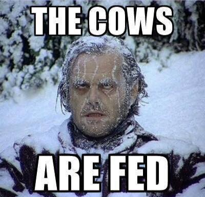 The Cows Are Fed - Farming Memes - Frozen Guy in the Snow Image