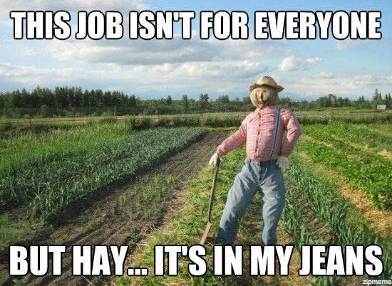This Job Isn't for Everyone, but Hay It's in My Jeans - Farming Memes - Scarecrow in a Field Image