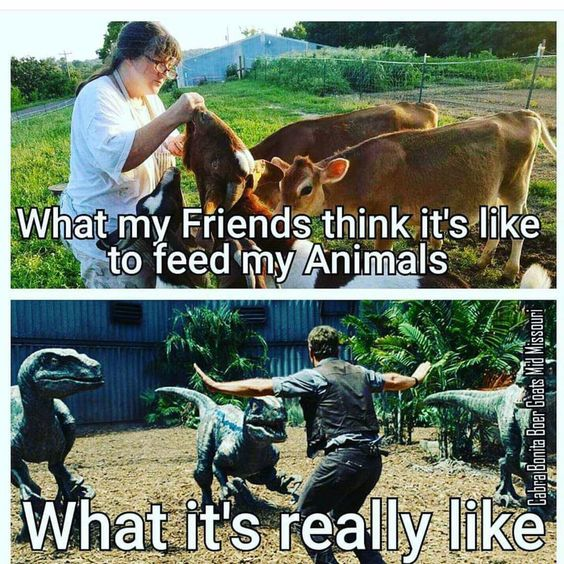 What My Friends Think It's Like to Feed My Animals, What It's Really Like - Farming Memes - Woman Feeding Animals / Guy Fighting Raptors Image