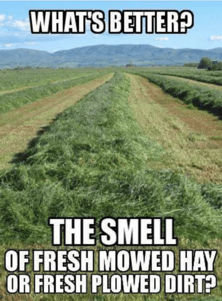 Whats Better, the Smell of Fresh Mowed Hay or Fresh Plowed Dirt - Farming Memes - Freshly Cut Hay Field Image