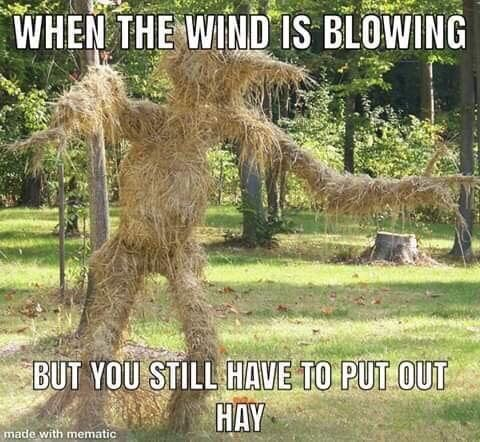 When the Wind Is Blowing but You Still Have to Put out Hay - Farming Memes - Man Covered in Hay Image
