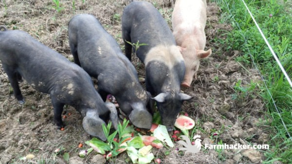 The Best Pig Feed in 2020