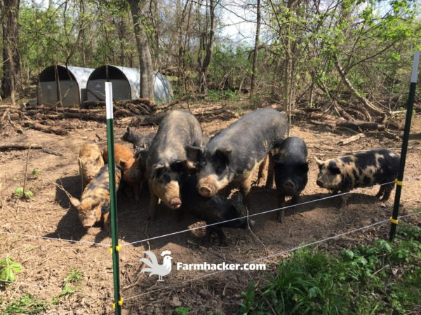 The 5 Best Pig Feeders in 2020