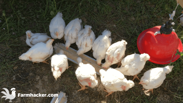 The 5 Best Chicken Feeders in 2021