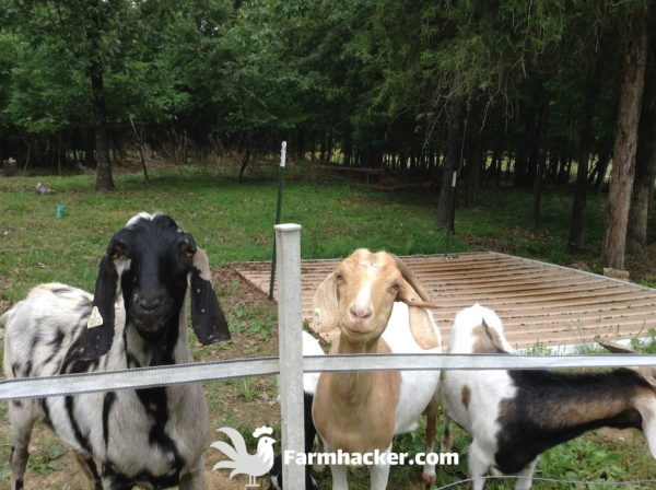 The 3 Best Goat Feeders in 2020