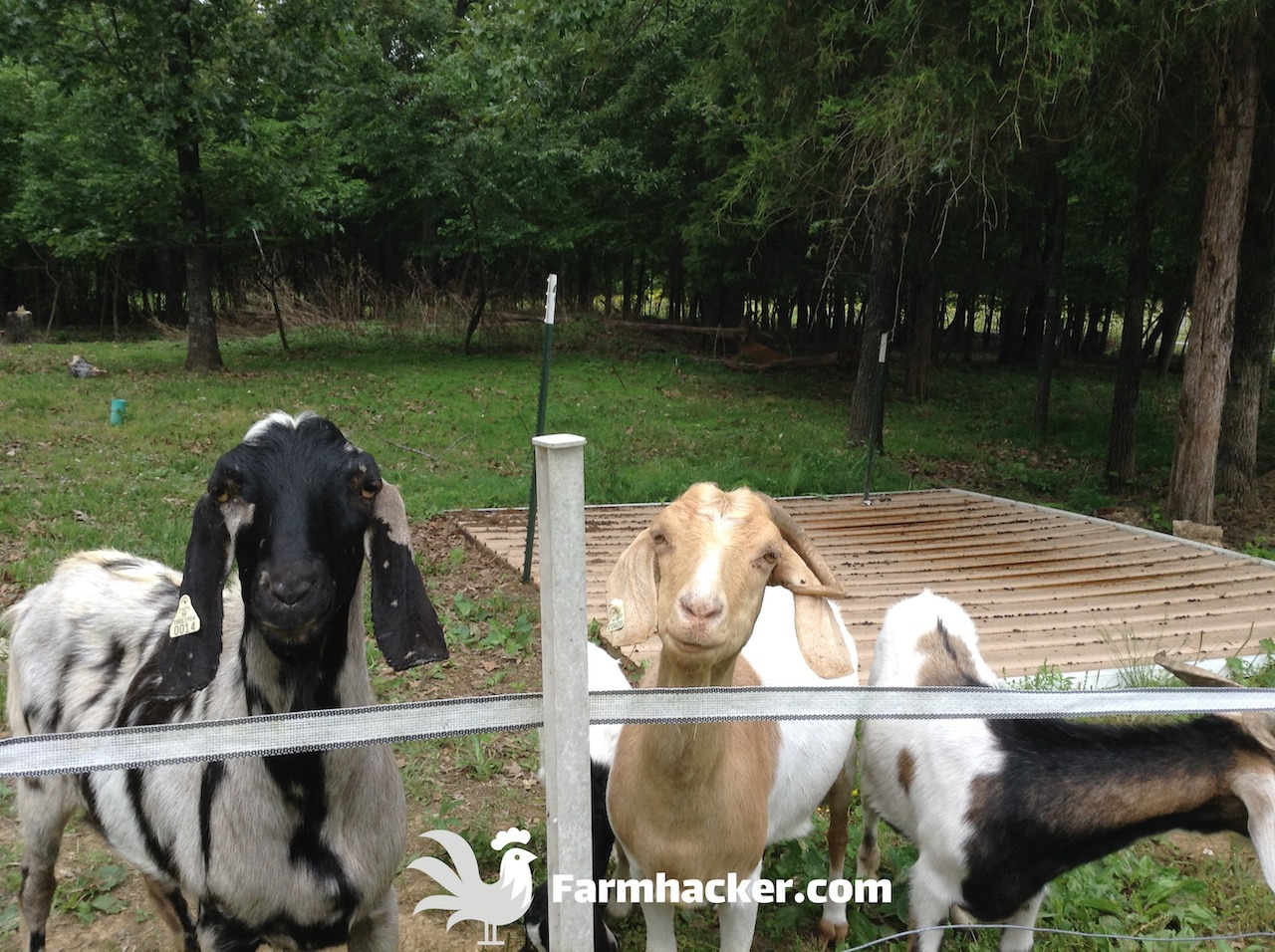 Best Goat Feeders Featured Image