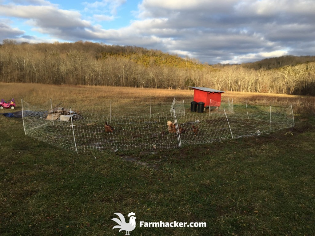 How to Till a Garden Without a Tiller Using Pigs - Fertilizing With Chickens