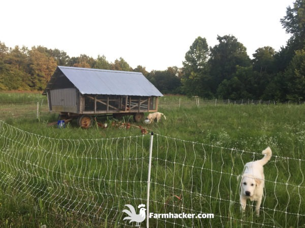 Read more about the article Build a Joel Salatin Style Eggmobile Mobile Chicken Coop