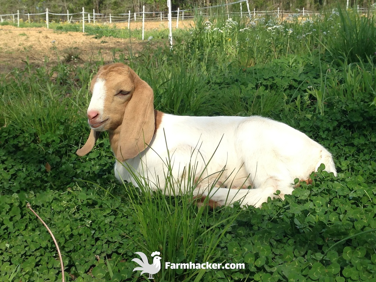 Best Goat Dewormers Featured Image