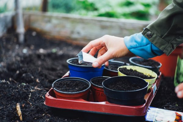 The 3 Best Organic Potting Soils in 2020