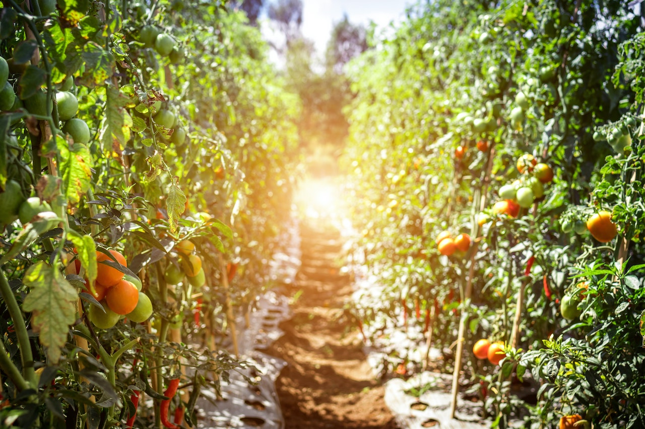The 4 Best Tomato Cages, Stakes, & Trellises in 2020