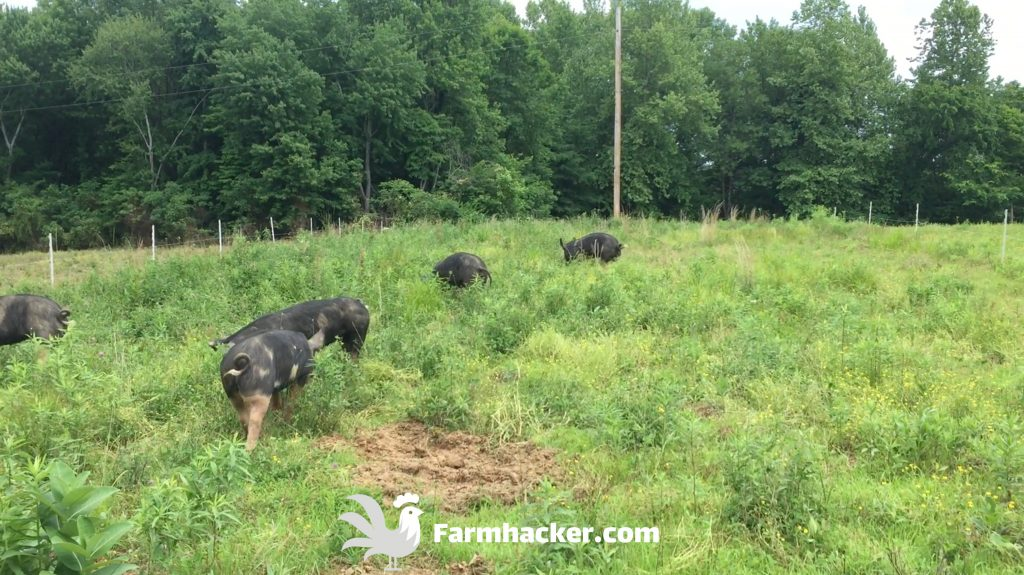 Pasture Pigs Rotational Grazing Paddocks Spokes